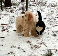 cat-and-dog-sticking-together-copy.jpg