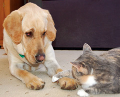 cat with paw on dog, dog looking quizzically