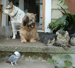 dogs, cat and parrot sitting together on porch