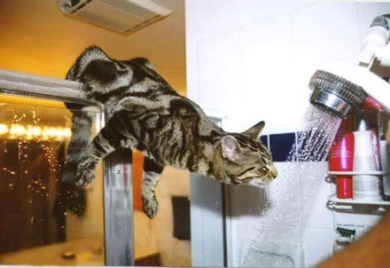 cat hanging on shower rod to investigate the shower