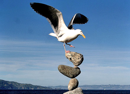 bird balancing on balanced rocks