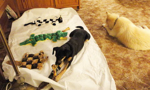 12-26-12-Sammy,-Montana-and-Toys-2