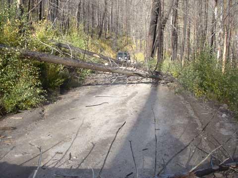 10-12-14-Trees-on-Road-4