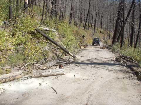 10-14-14-Trees-on-Road-1
