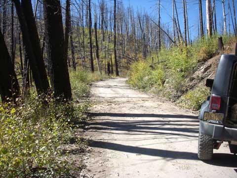 10-14-14-Trees-on-Road-2