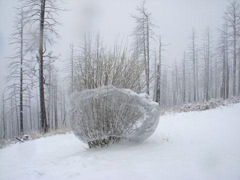 5-01-16-Snow-2